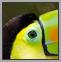Gallery-Birds