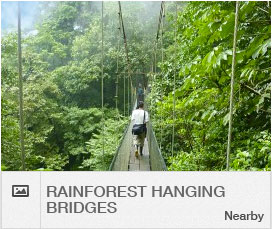 activities-scroller-hanging-bridges
