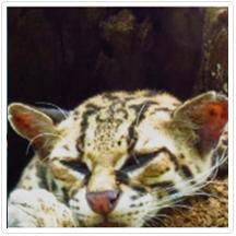 Las Pumas Reserve